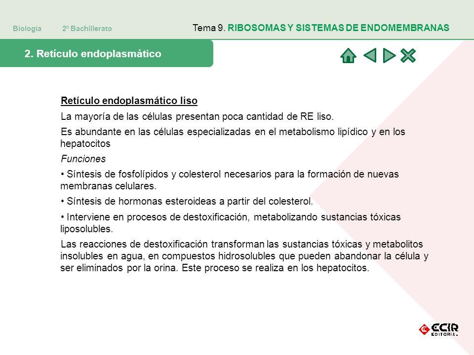 Biología 2º Bachillerato Tema 9. RIBOSOMAS Y SISTEMAS DE ENDOMEMBRANAS 2. Retículo endoplasmático Retículo endoplasmático liso La mayoría de las célul