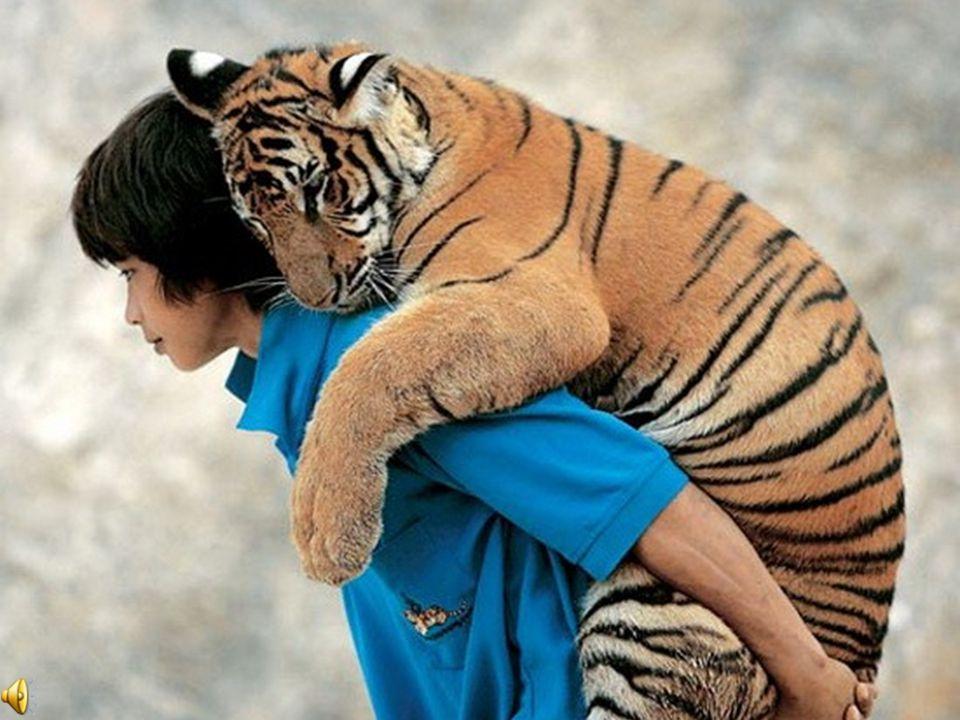 24 Dios dijo: Que la tierra produzca toda clase de seres vivientes: ganado, reptiles y animales salvajes de toda especie .