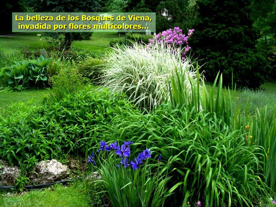 www.vitanaoblepowerpoints.net Rodeada por los Bosques de Viena, Baden tiene aire puro, temperatura agradable, que da una sensación permanente de biene