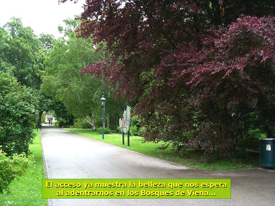 www.vitanaoblepowerpoints.net La belleza de los Bosques de Viena, invadida por flores multicolores...