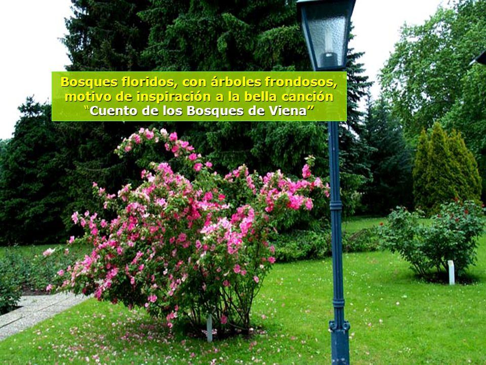 www.vitanaoblepowerpoints.net El acceso ya muestra la belleza que nos espera al adentrarnos en los Bosques de Viena...