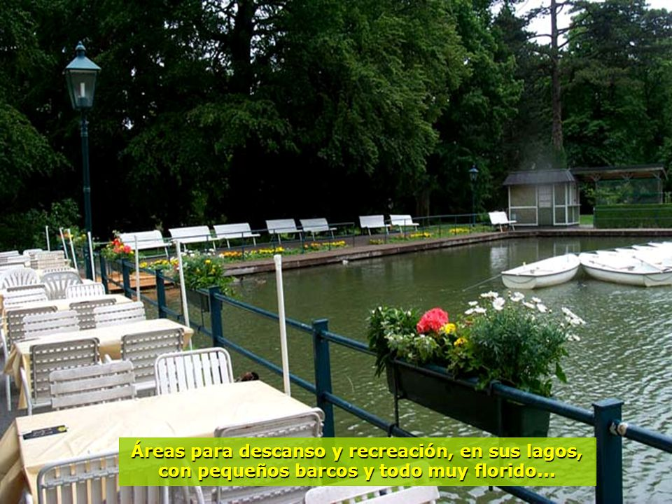 www.vitanaoblepowerpoints.net Bosques floridos, con árboles frondosos, motivo de inspiración a la bella canciónCuento de los Bosques de Viena