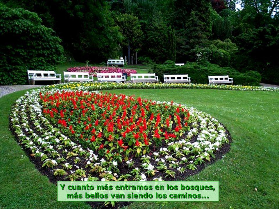 www.vitanaoblepowerpoints.net Una gran variedad de plantas y flores, para llenar los ojos y el corazón...