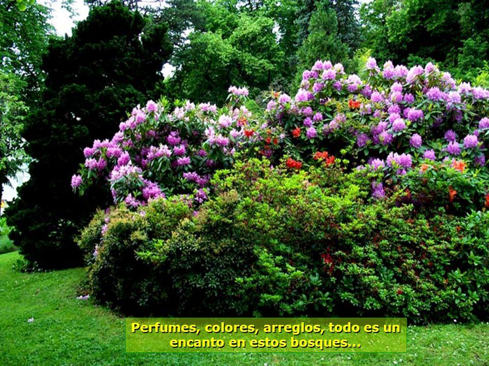 www.vitanaoblepowerpoints.net Y cuanto más entramos en los bosques, más bellos van siendo los caminos...