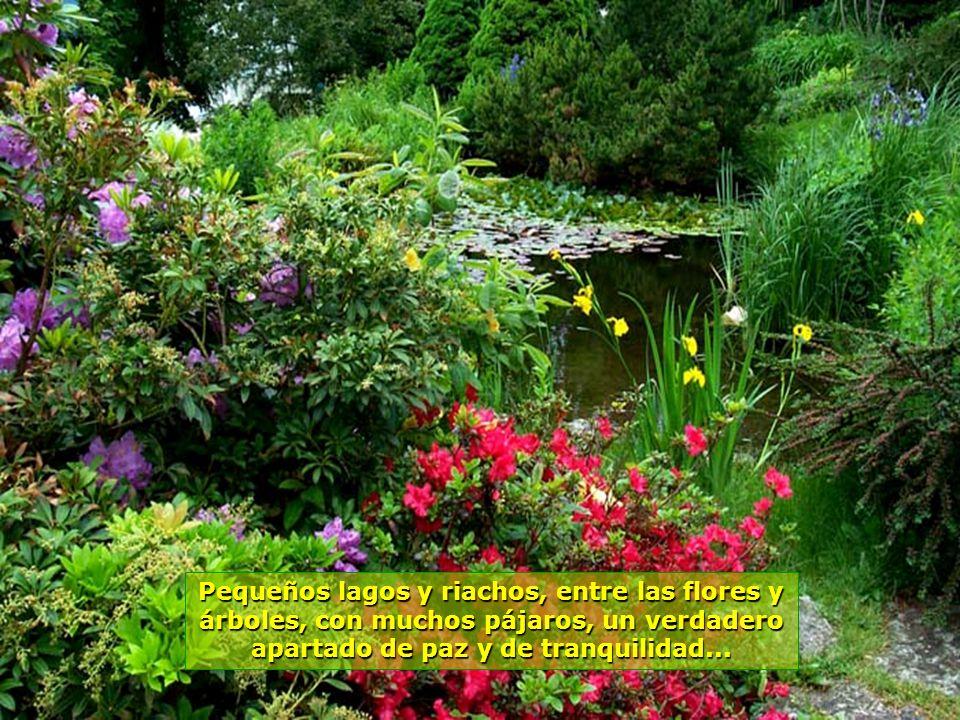 www.vitanaoblepowerpoints.net Perfumes, colores, arreglos, todo es un encanto en estos bosques...