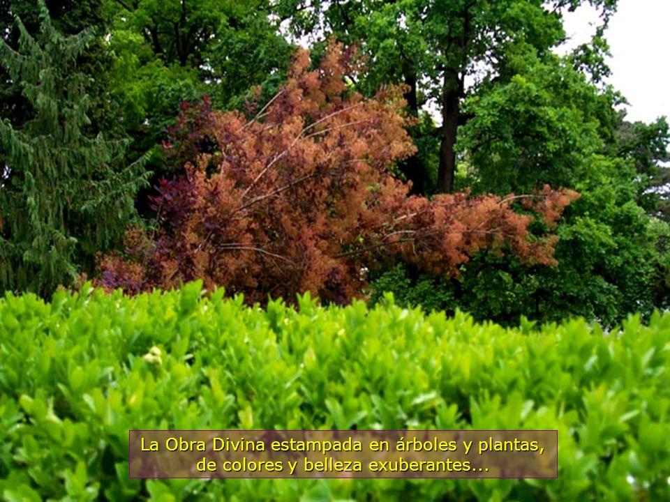 www.vitanaoblepowerpoints.net Todos los colores de la naturaleza están aquí representados, en bellas flores...
