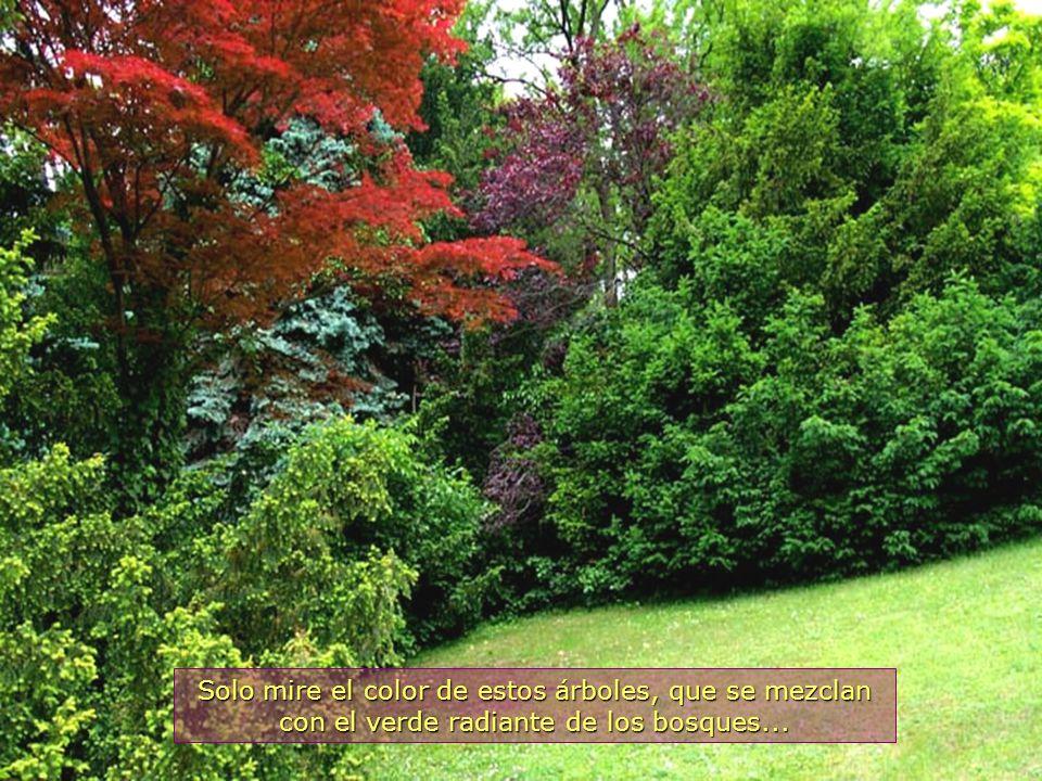 www.vitanaoblepowerpoints.net La Obra Divina estampada en árboles y plantas, de colores y belleza exuberantes...