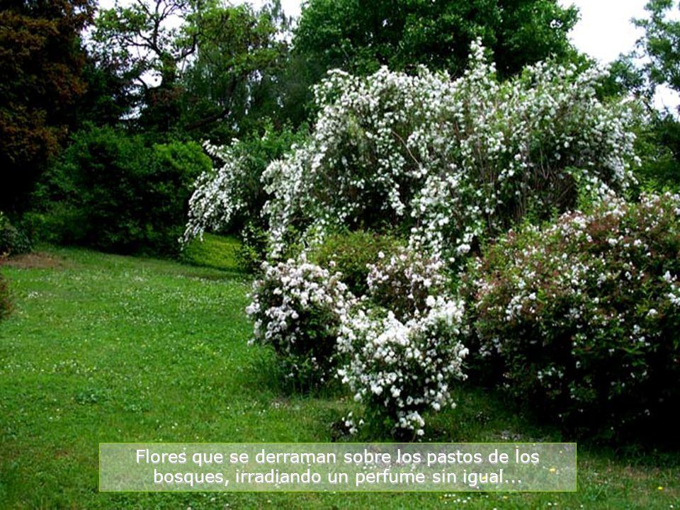 www.vitanaoblepowerpoints.net Solo mire el color de estos árboles, que se mezclan con el verde radiante de los bosques...