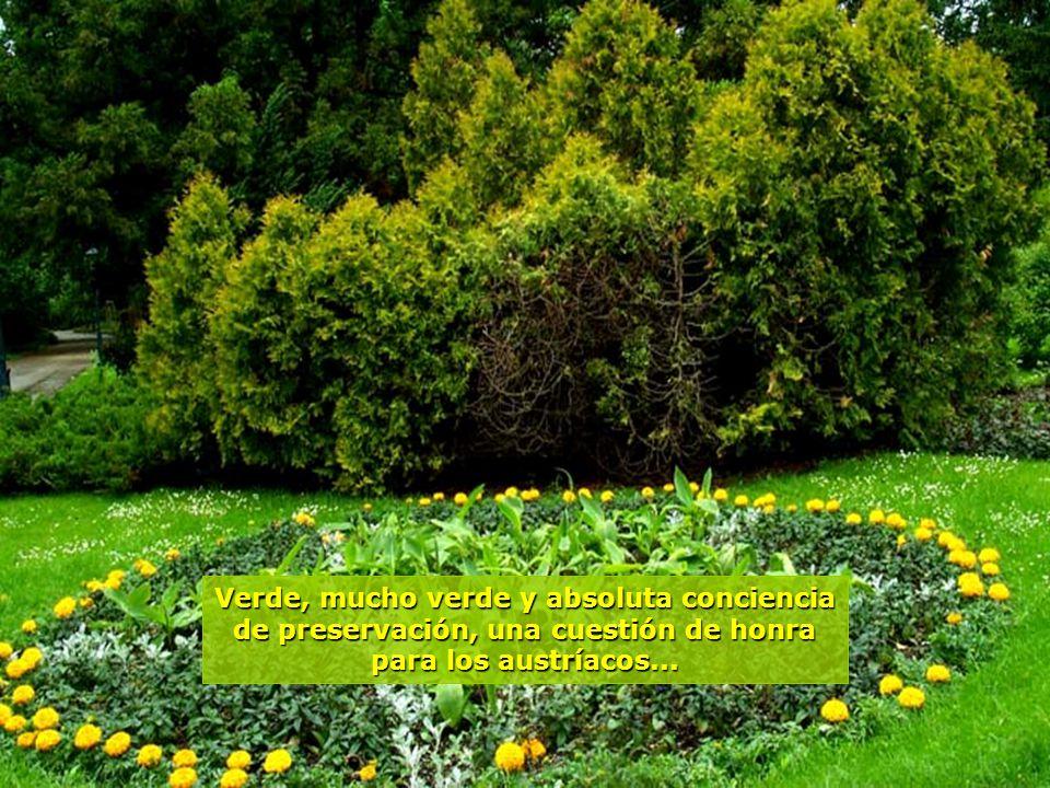 www.vitanaoblepowerpoints.net No hay como traducir el momento de paz que se siente al adentrarse en estos bosques...