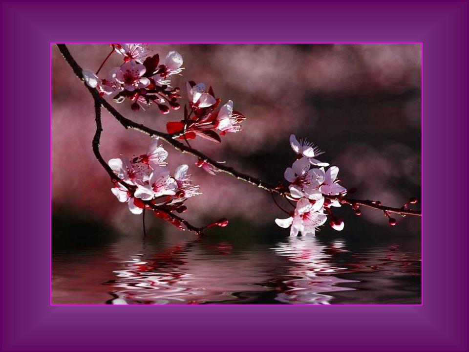Cada rosa gentíl ayer nacida, cada aurora que apunta entre sonrojos, dejan mi alma en el éxtasis sumida. Nunca se cansan de mirar mis ojos ¡el perpetu