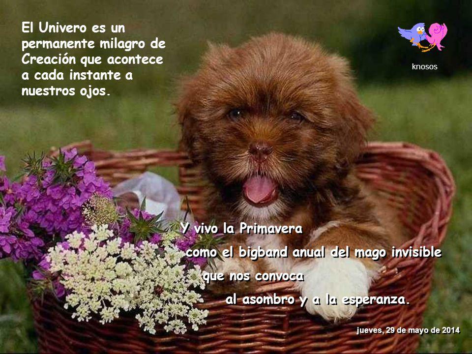 www.vitanoblepowerpoints.net FELIZ PRIMAVERA FELIZ PRIMAVERA