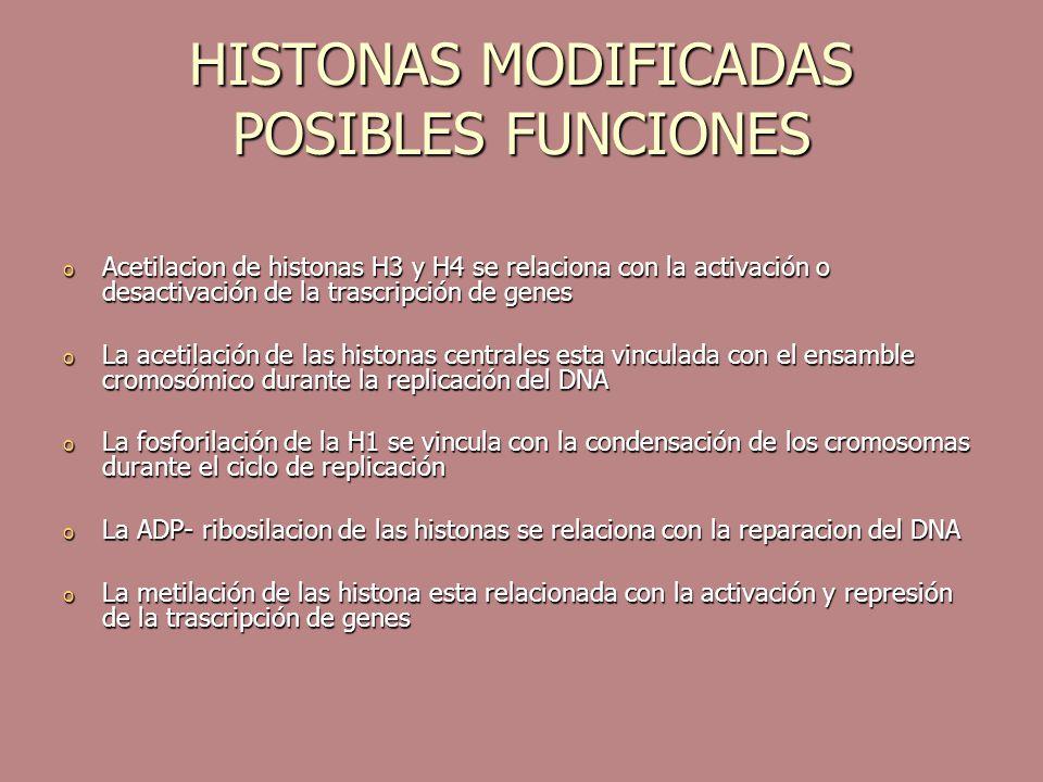 HISTONAS MODIFICADAS POSIBLES FUNCIONES o Acetilacion de histonas H3 y H4 se relaciona con la activación o desactivación de la trascripción de genes o