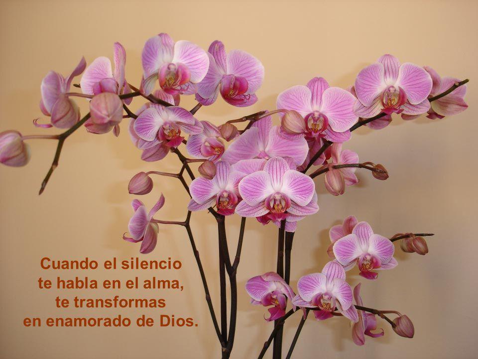 Vita Noble Powerpoints Cuando el silencio de Dios habla, la vida se transforma en misterio de Dios.