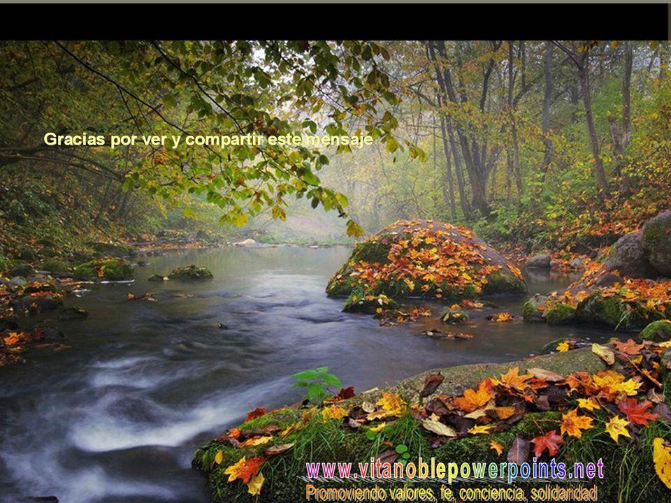 Vita Noble Powerpoints Silencio en tu cuerpo, silencio en tu mente, silencio en tu corazón silencio en todo tu ser… Atención amorosa a Dios, abierta y