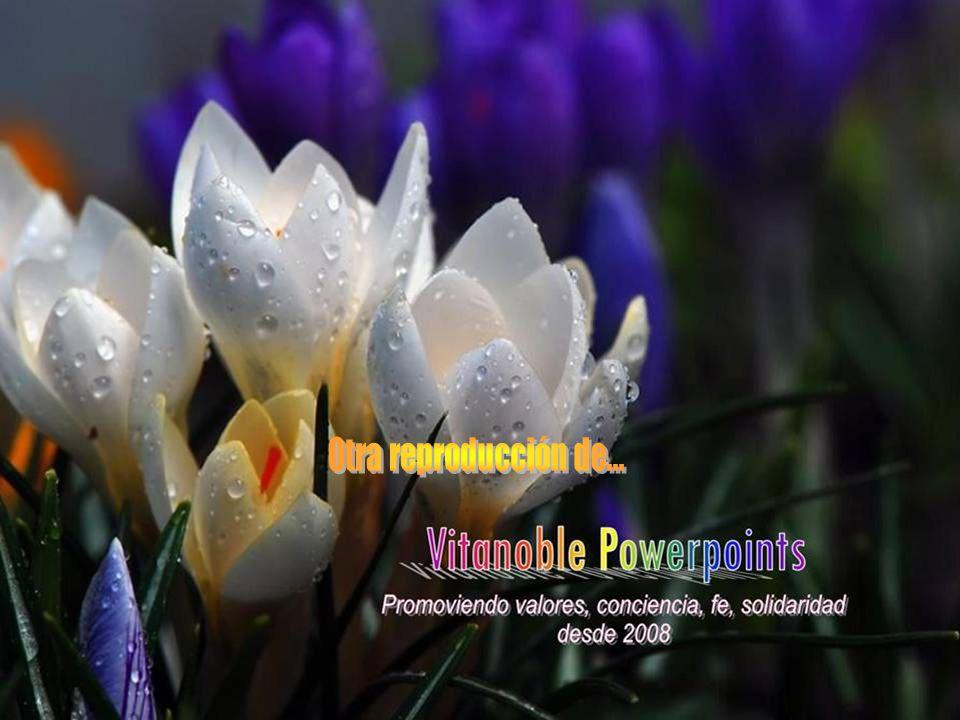 www.vitanoblepowerpoints.net Es mejor que digan ¡Aquí corrió! y no ¡ Aquí lo mataron! Anónimo