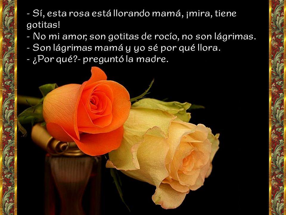 - Sí, esta rosa está llorando mamá, ¡mira, tiene gotitas.