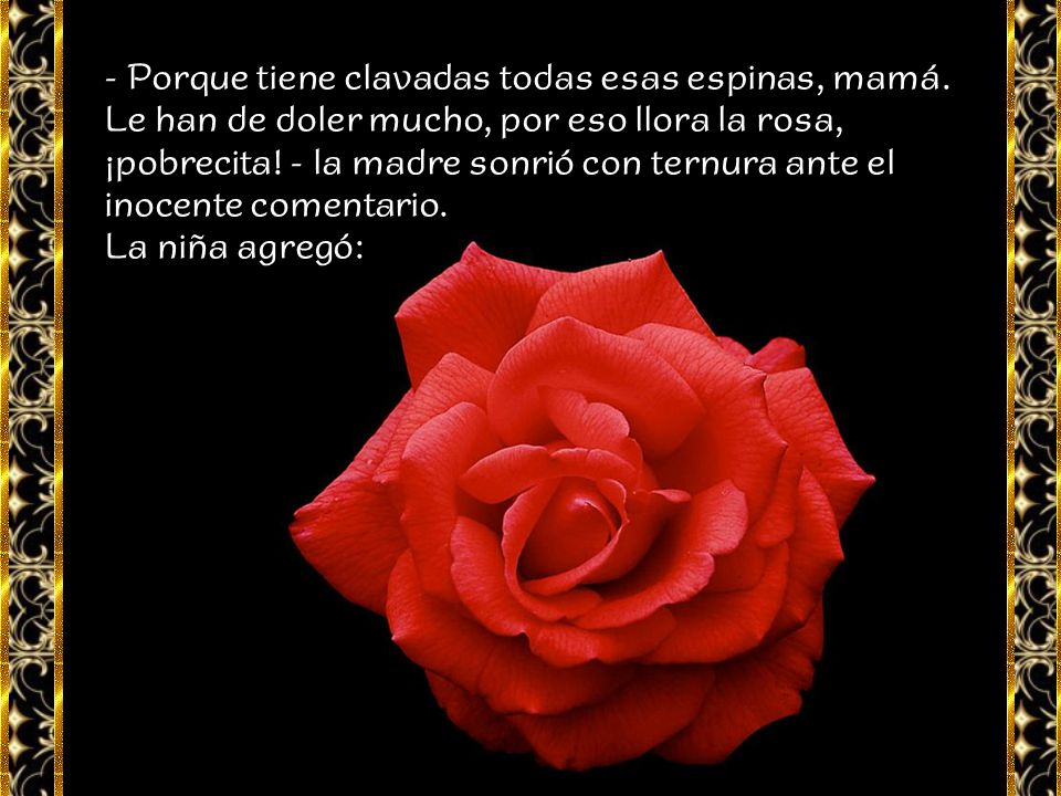 - Sí, esta rosa está llorando mamá, ¡mira, tiene gotitas! - No mi amor, son gotitas de rocío, no son lágrimas. - Son lágrimas mamá y yo sé por qué llo