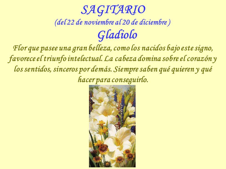 ESCORPIO (del 23 de octubre al 21 de noviembre ) Clavel Flor que representa el amor puro, es signo de longevidad y lealtad. Suelen ser amados y nunca