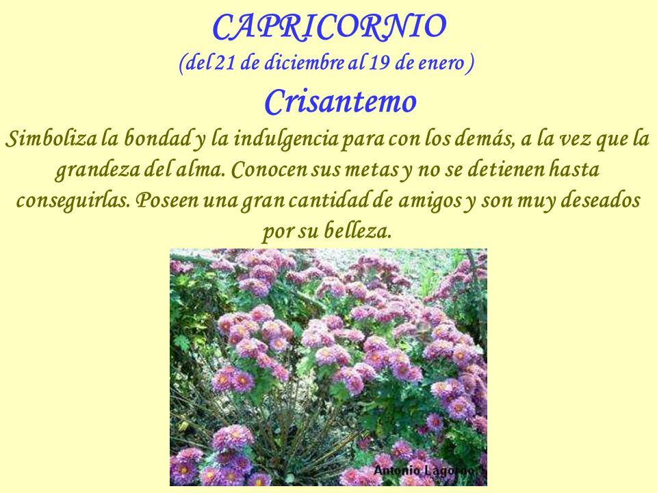 SAGITARIO (del 22 de noviembre al 20 de diciembre ) Gladiolo Flor que pasee una gran belleza, como los nacidos bajo este signo, favorece el triunfo in