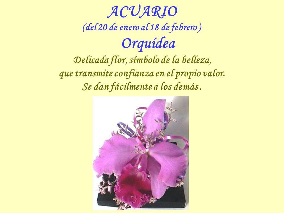 CAPRICORNIO (del 21 de diciembre al 19 de enero ) Crisantemo Simboliza la bondad y la indulgencia para con los demás, a la vez que la grandeza del alm