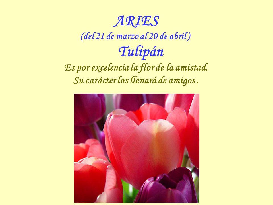 ARIES (del 21 de marzo al 20 de abril ) Tulipán Es por excelencia la flor de la amistad.