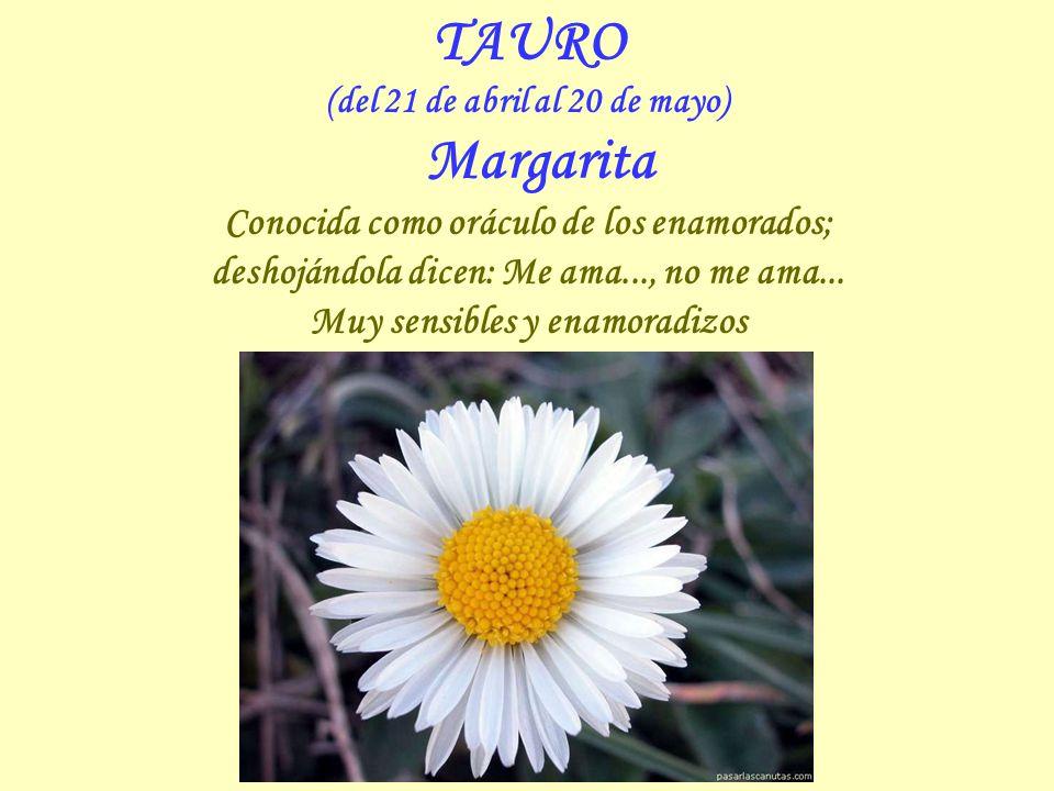 TAURO (del 21 de abril al 20 de mayo) Margarita Conocida como oráculo de los enamorados; deshojándola dicen: Me ama..., no me ama...