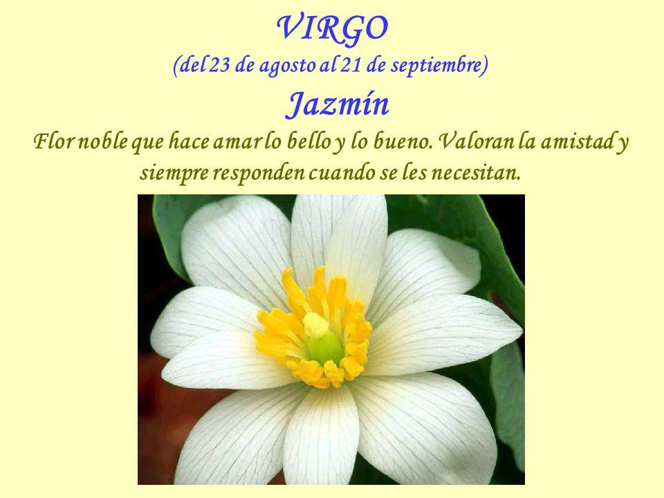 VIRGO (del 23 de agosto al 21 de septiembre) Jazmín Flor noble que hace amar lo bello y lo bueno.