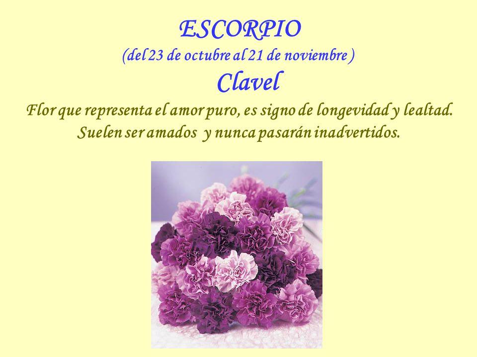 ESCORPIO (del 23 de octubre al 21 de noviembre ) Clavel Flor que representa el amor puro, es signo de longevidad y lealtad.