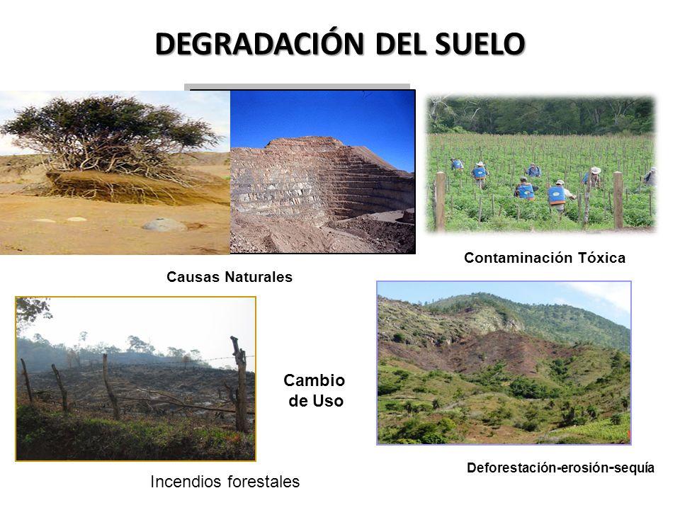 DEGRADACIÓN DEL SUELO Causas Naturales Contaminación Tóxica Deforestación-erosión - sequía Cambio de Uso Incendios forestales