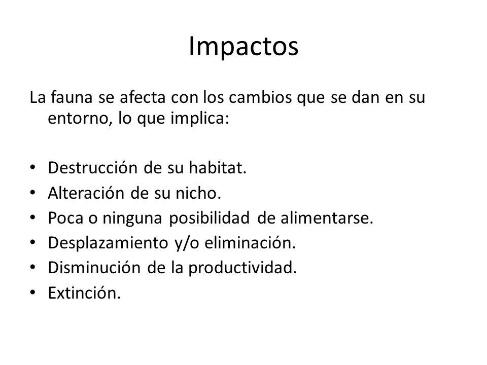 Impactos La fauna se afecta con los cambios que se dan en su entorno, lo que implica: Destrucción de su habitat. Alteración de su nicho. Poca o ningun