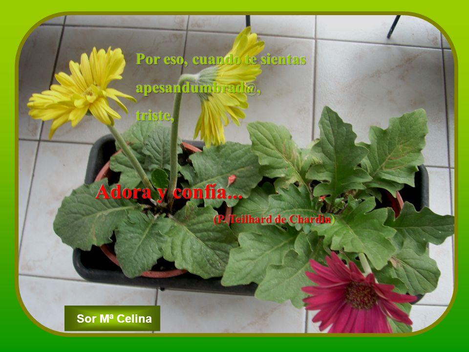 Sor Mª Celina