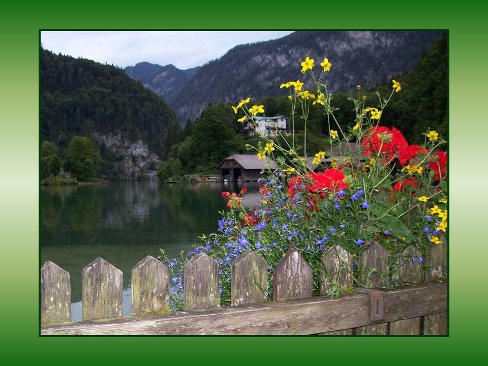 ...y las flores estaban frescas, lindas, empapadas en olor: la rosa virgen, la blanca margarita, la azucena gentil y las volúbiles que cuelgan de la r