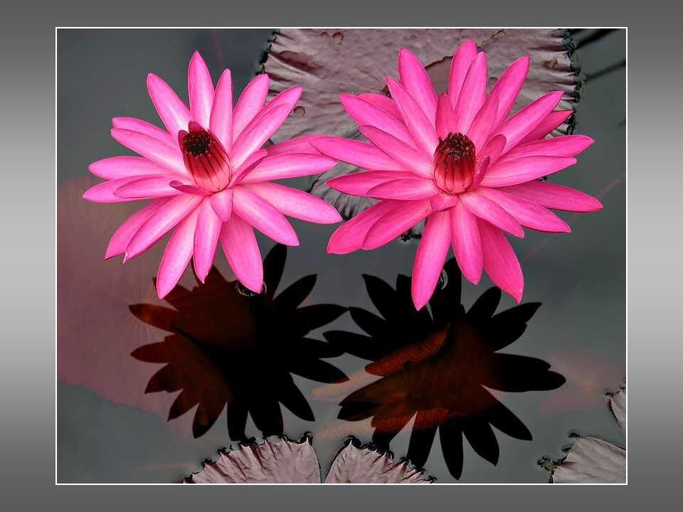 ...y las flores estaban frescas, lindas, empapadas en olor: la rosa virgen, la blanca margarita, la azucena gentil y las volúbiles que cuelgan de la rama estremecida.