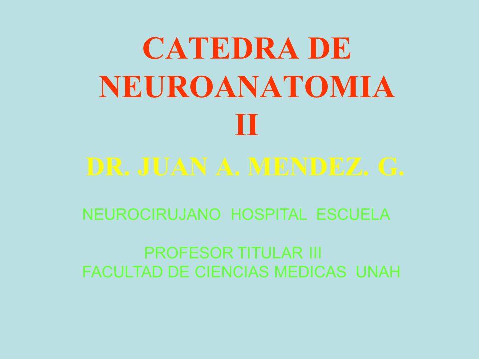 CATEDRA DE NEUROANATOMIA II DR. JUAN A. MENDEZ. G. NEUROCIRUJANO HOSPITAL ESCUELA PROFESOR TITULAR III FACULTAD DE CIENCIAS MEDICAS UNAH