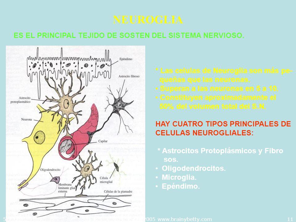 5/29/2014Template copyright 2005 www.brainybetty.com11 NEUROGLIA ES EL PRINCIPAL TEJIDO DE SOSTEN DEL SISTEMA NERVIOSO. * Las celulas de Neuroglia son