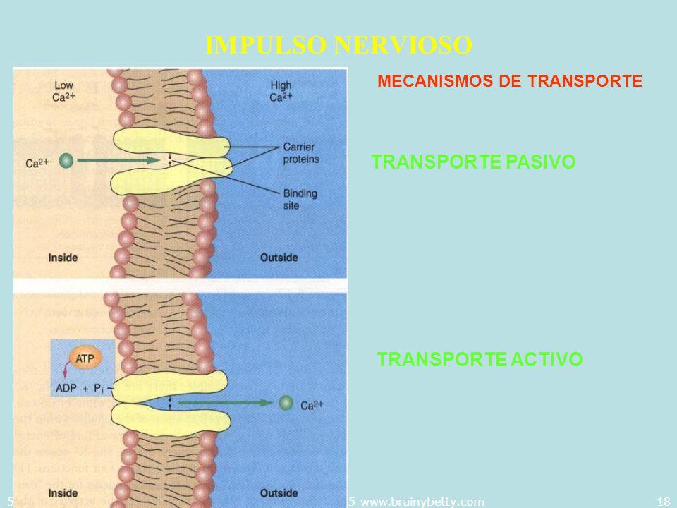 5/29/2014Template copyright 2005 www.brainybetty.com18 IMPULSO NERVIOSO MECANISMOS DE TRANSPORTE TRANSPORTE PASIVO TRANSPORTE ACTIVO