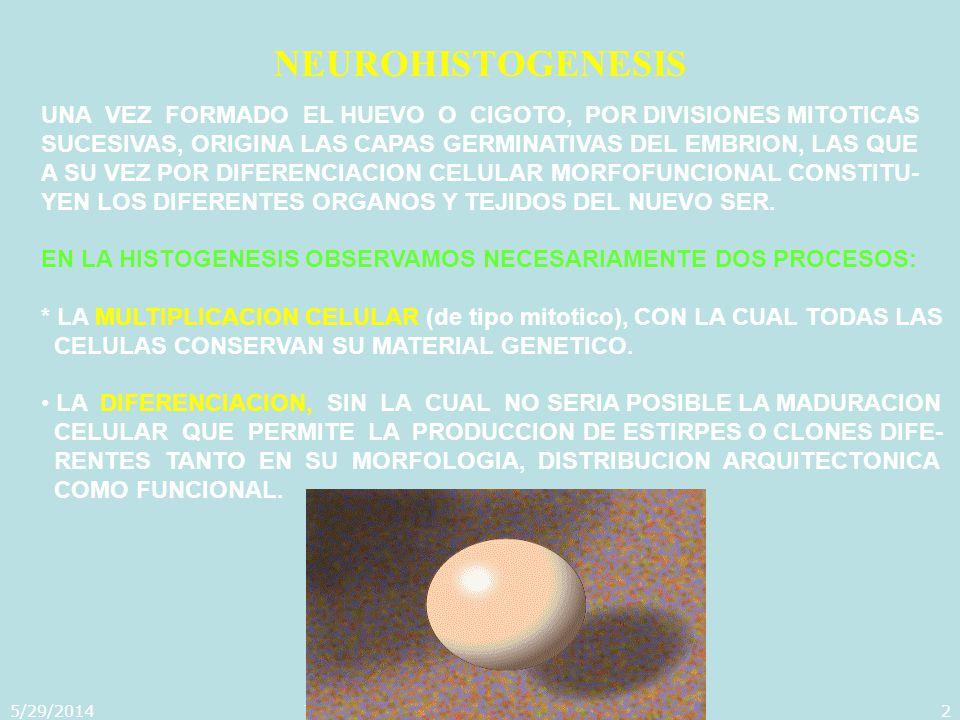 5/29/2014Template copyright 2005 www.brainybetty.com2 NEUROHISTOGENESIS UNA VEZ FORMADO EL HUEVO O CIGOTO, POR DIVISIONES MITOTICAS SUCESIVAS, ORIGINA