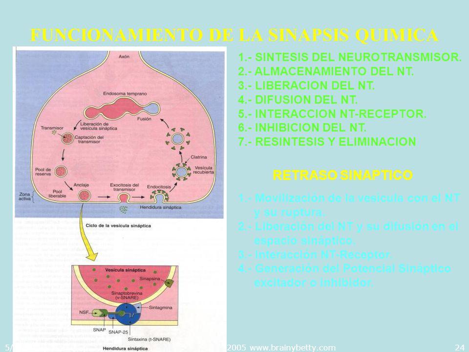 5/29/2014Template copyright 2005 www.brainybetty.com24 FUNCIONAMIENTO DE LA SINAPSIS QUIMICA 1.- SINTESIS DEL NEUROTRANSMISOR. 2.- ALMACENAMIENTO DEL