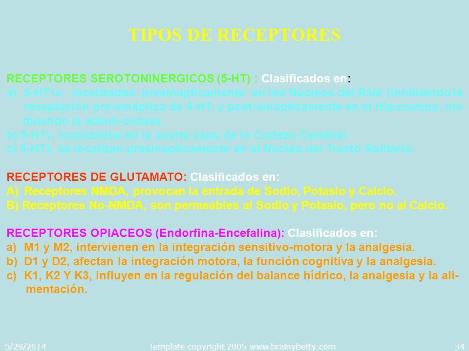 5/29/2014Template copyright 2005 www.brainybetty.com34 TIPOS DE RECEPTORES RECEPTORES SEROTONINERGICOS (5-HT) : Clasificados en: a)5-HT 1A, localizado