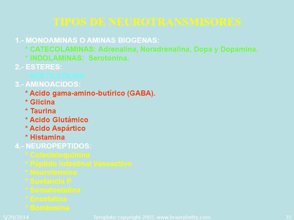 5/29/2014Template copyright 2005 www.brainybetty.com35 TIPOS DE NEUROTRANSMISORES 1.- MONOAMINAS O AMINAS BIOGENAS: * CATECOLAMINAS: Adrenalina, Norad