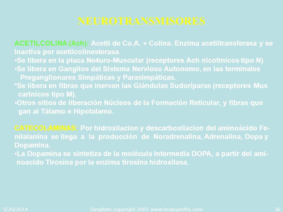 5/29/2014Template copyright 2005 www.brainybetty.com36 NEUROTRANSMISORES ACETILCOLINA (Ach): Acetil de Co.A. + Colina. Enzima acetiltransferasa y se I