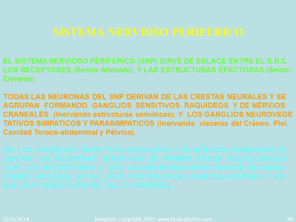 5/29/2014Template copyright 2005 www.brainybetty.com48 SISTEMA NERVIOSO PERIFERICO EL SISTEMA NERVIOSO PERIFERICO (SNP) SIRVE DE ENLACE ENTRE EL S.N.C