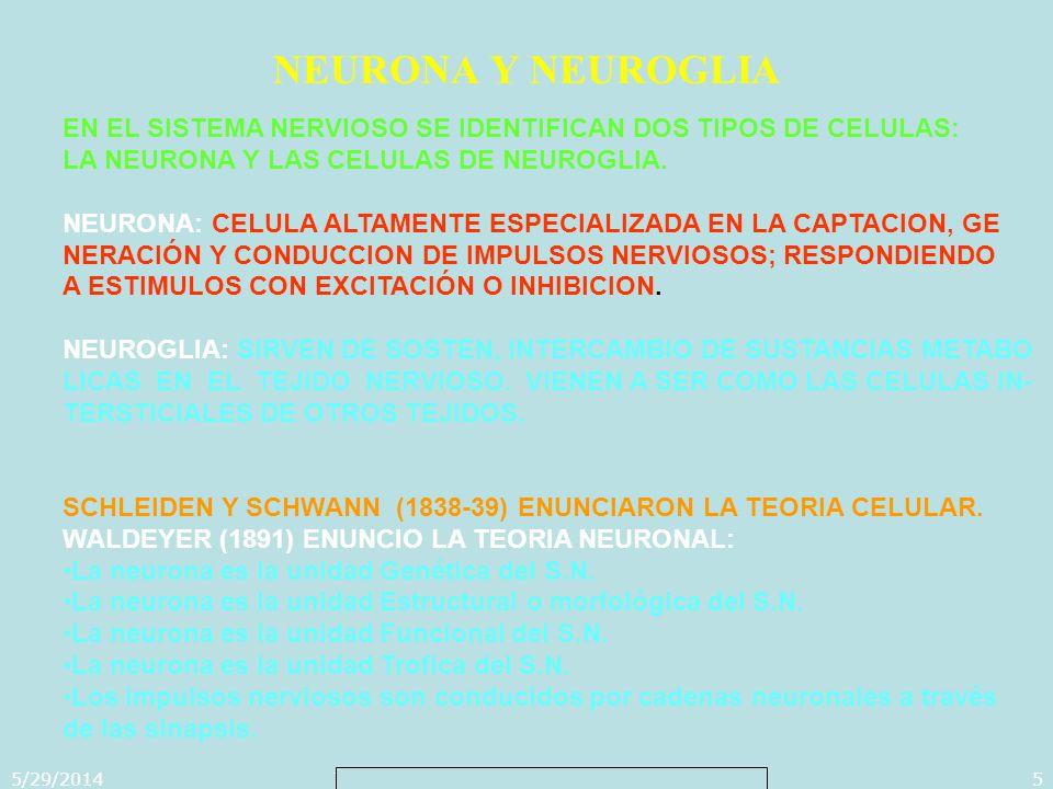 5/29/2014Template copyright 2005 www.brainybetty.com5 NEURONA Y NEUROGLIA EN EL SISTEMA NERVIOSO SE IDENTIFICAN DOS TIPOS DE CELULAS: LA NEURONA Y LAS