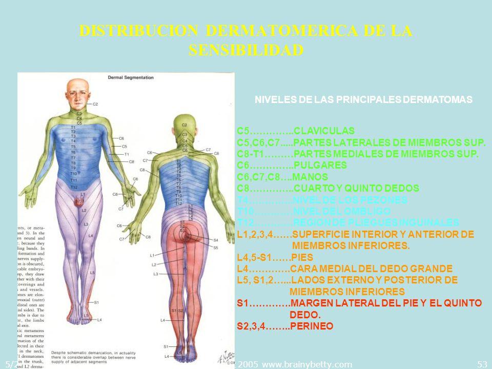 5/29/2014Template copyright 2005 www.brainybetty.com53 DISTRIBUCION DERMATOMERICA DE LA SENSIBILIDAD NIVELES DE LAS PRINCIPALES DERMATOMAS C5…………..CLA