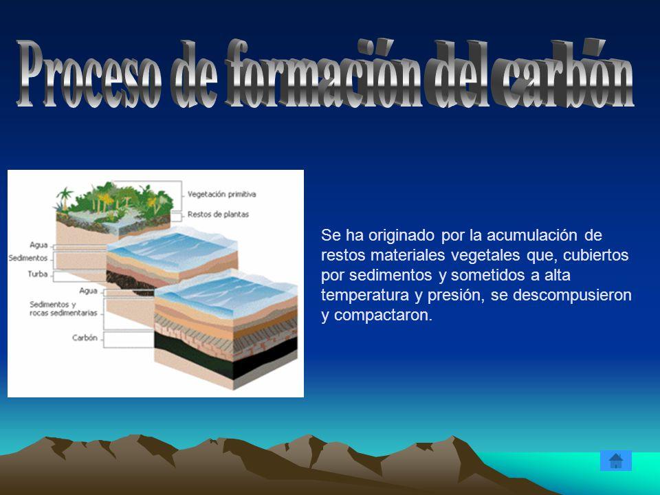 Se ha originado por la acumulación de restos materiales vegetales que, cubiertos por sedimentos y sometidos a alta temperatura y presión, se descompus