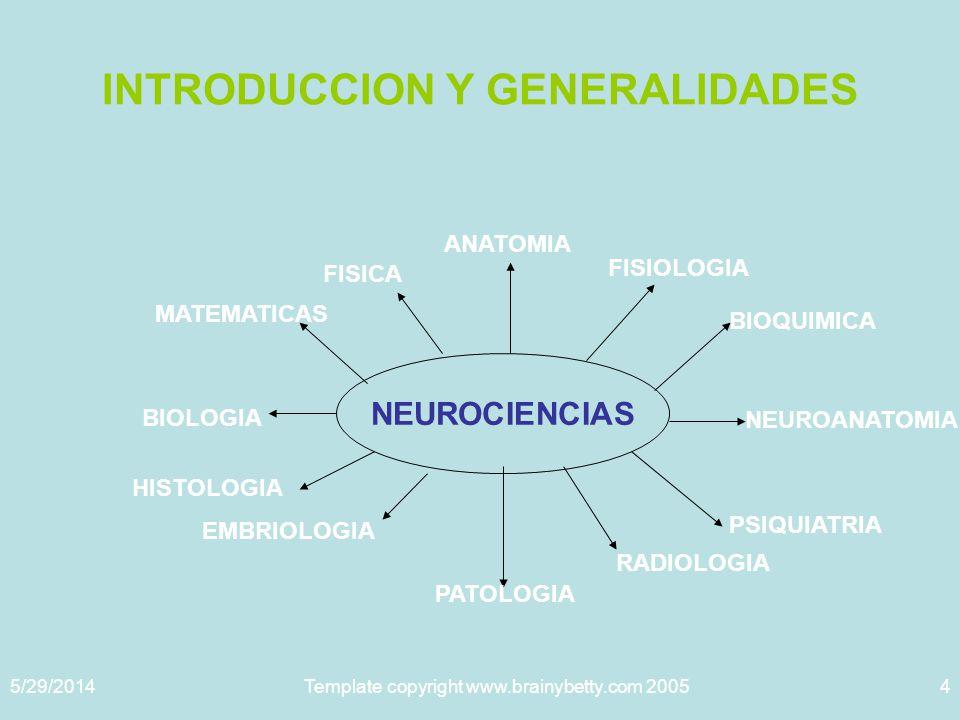 5/29/2014Template copyright www.brainybetty.com 20055 La neuroanatomía, con sus principios y postulados ha dado pie a la creación y desarrollo de otras ciencias, como la CIBERNE TICA.