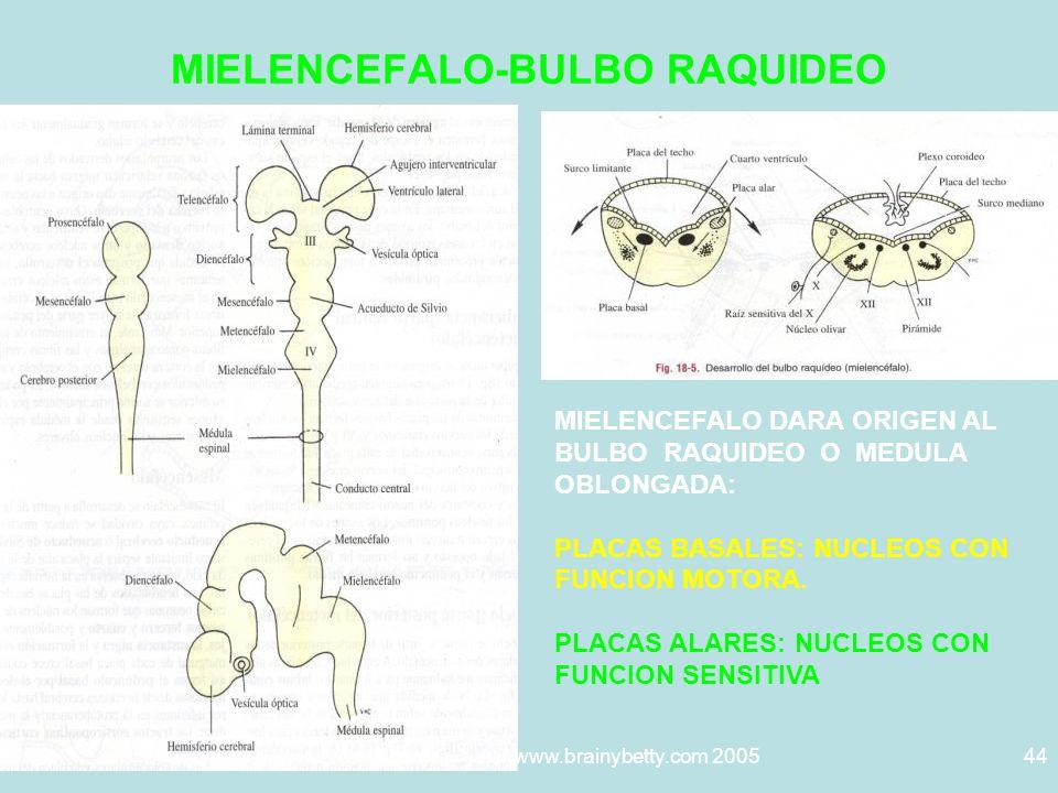 5/29/2014Template copyright www.brainybetty.com 200544 MIELENCEFALO-BULBO RAQUIDEO MIELENCEFALO DARA ORIGEN AL BULBO RAQUIDEO O MEDULA OBLONGADA: PLACAS BASALES: NUCLEOS CON FUNCION MOTORA.