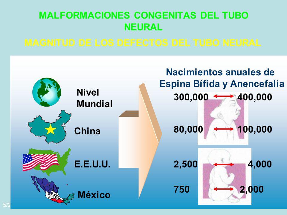 5/29/2014Template copyright www.brainybetty.com 200558 MALFORMACIONES CONGENITAS DEL TUBO NEURAL MAGNITUD DE LOS DEFECTOS DEL TUBO NEURAL Nivel Mundial 300,000 400,000 China 80,000 100,000 E.E.U.U.2,500 4,000 México 750 2,000 Nacimientos anuales de Espina Bífida y Anencefalia