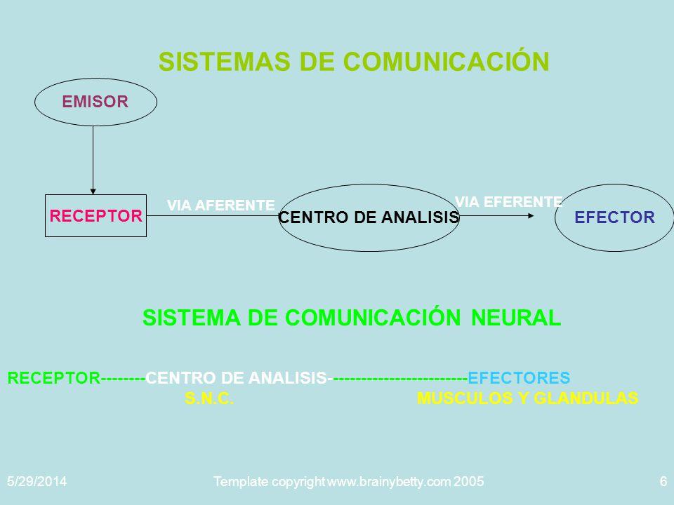 5/29/2014Template copyright www.brainybetty.com 20056 SISTEMAS DE COMUNICACIÓN EMISOR RECEPTOR CENTRO DE ANALISISEFECTOR VIA AFERENTE VIA EFERENTE SISTEMA DE COMUNICACIÓN NEURAL RECEPTOR--------CENTRO DE ANALISIS-------------------------EFECTORES S.N.C.