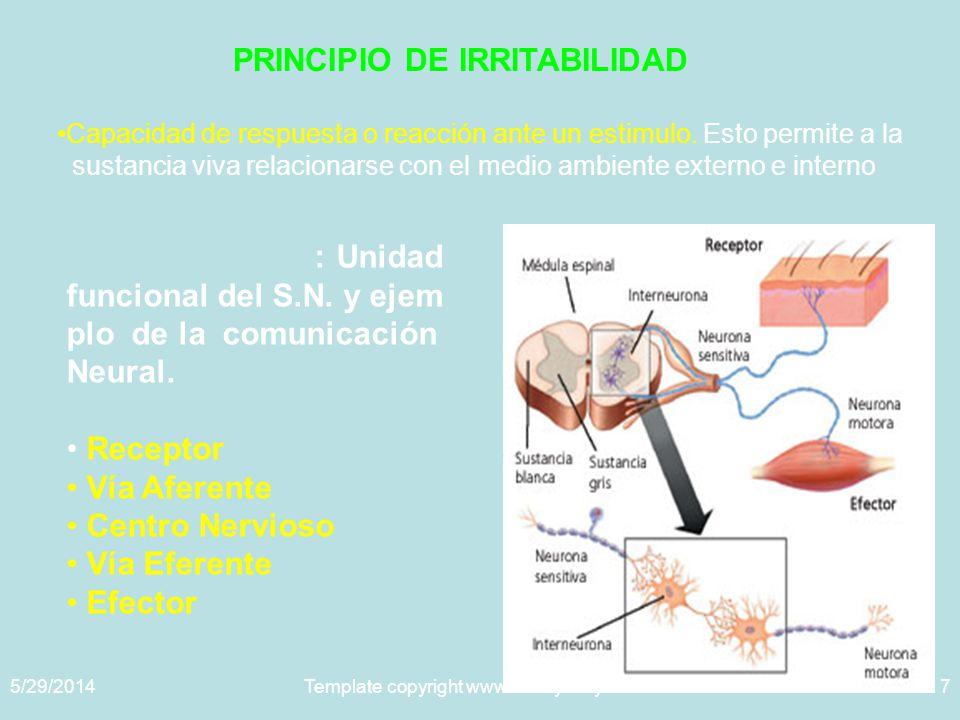 5/29/2014Template copyright www.brainybetty.com 20057 PRINCIPIO DE IRRITABILIDAD Capacidad de respuesta o reacción ante un estimulo.